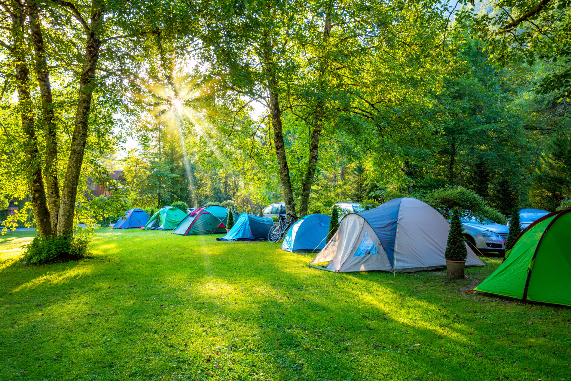 Tents Camping area at early sunny morning, beautiful natural place with big trees and green grass